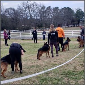 German Shepherd Training Charlotte NC